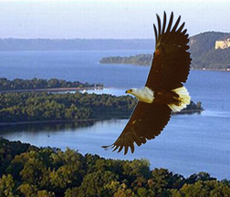 Eagle over Mississippi River