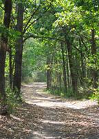 camino en las maderas cerca Villa Maria, Frontenac, MN