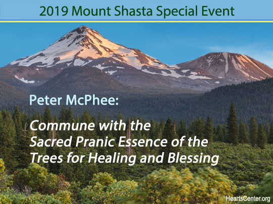 Peter McPhee: Commune with the Sacred Pranic Essence of the Trees for Healing and Blessing (VIDEO)