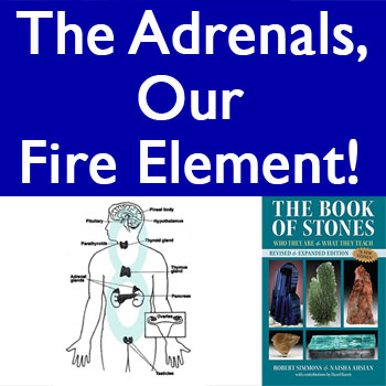 The Endocrine System! The Adrenals, our Fire Element! (VIDEO)
