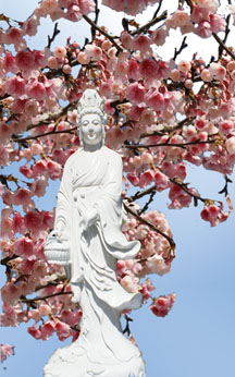 Kuan Yin with Cherry Blossoms